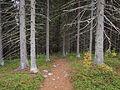 Nyrölä nature trail 5.jpg