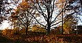 Oak - panoramio (4).jpg