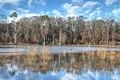 Ocmulgee wetlands - panoramio.jpg