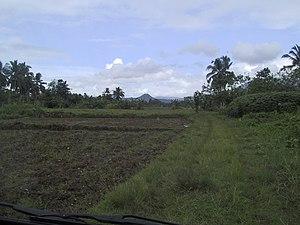 Burauen, Leyte - Rice fields