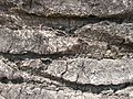 Old grey palm tree trunk closeup.jpg