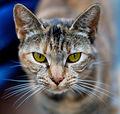 Olhos de um gato-3.jpg