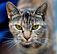 57px-Olhos_de_um_gato-3.jpg