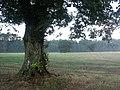 Open Grassland - geograph.org.uk - 913134.jpg