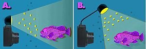 Orb (optics) - A hypothetical underwater instance with two conditions in which orbs are (A) likely or (B) unlikely, depending on whether the aspect of particles facing the lens are directly illuminated by the flash, as shown. Elements not shown to scale.
