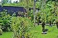 Orchid Garden Bali Indonesia - panoramio (3).jpg