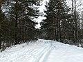 Orekhovo-Zuyevsky District, Moscow Oblast, Russia - panoramio - z-pinch (1).jpg
