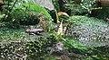 Oriental fire-bellied toad (Bombina orientalis).jpg