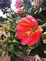 Ornamental Passionfruit.jpg