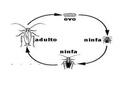 Ovo-ninfa-adulto Inseto com metamorfose incompleta.pdf
