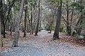 Oxbo Trail, Roswell, GA Nov 2017 1.jpg