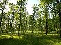 Přírodní park Baba186.jpg