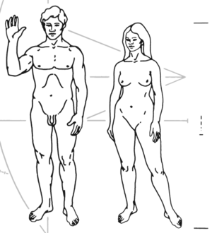 The Pioneer plaque.
