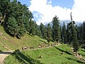 Pahalgam views 57.JPG