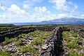 Paisagem Protegida de Interesse Regional da Cultura da Vinha da Ilha do Pico, campos de vinha, muros, São Roque do Pico, ilha do Pico, Açores.JPG