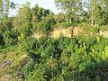 """Paldiski kindlustused ehk """"muula mäed"""" 6.JPG"""