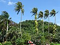 Palms with Hilly Terrain - Kep - Cambodia (48543481622).jpg