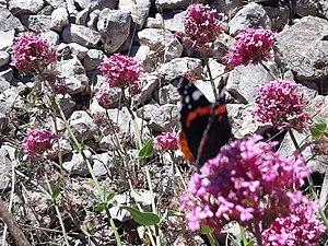 Para la mariposa eso es un manjar supongo.jpg