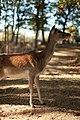 """Parcul de Animale - """"Moara de Vant"""" (8110122087).jpg"""