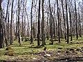 Park Koplis - panoramio - Aulo Aasmaa (1).jpg