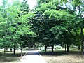 Park area - panoramio.jpg