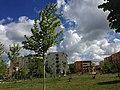 Parku i ri Fier.jpg