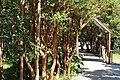 Parque Nacional Chiloé 04.jpg