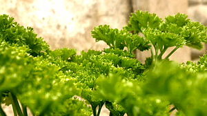 Flavonoid - Parsley is a source of flavones.