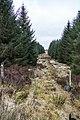 Path through forest at Muirglass - panoramio.jpg