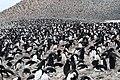 Penguin from frame to frame (24636034635).jpg