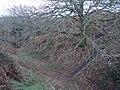 Penstowe Castle near Kilkhampton - geograph.org.uk - 643892.jpg