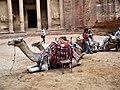 Petra, Jordan. People, Camels and love in air.jpg