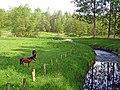 Pferde im nördlichen Münsterland - panoramio.jpg