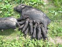 Les mammifères sont d'abord caractérisés - comme leur nom le rappelle - par l'allaitement