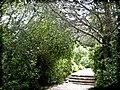 PikiWiki Israel 28690 Green Pine Trees.jpg