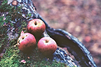 Piper Orchard - Image: Piper Orchard three apples