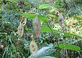 Plant in nature reserve Macie diery (3).jpg