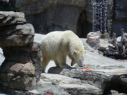 Polar Bear In Exhibit.jpg