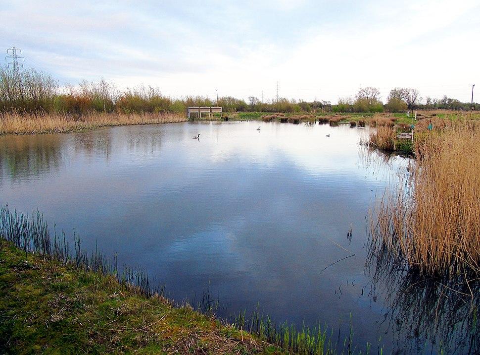 Pond and Wildbird Scrape at Newport Wetlands RSPB Reserve Visitor Centre