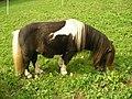 Poney (Black tobiano) (2).jpg