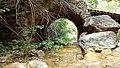 Pont de les Masies, baixant pel torrent d'Aubàs.jpg