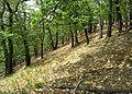 Prague Kunraticky Forest Loess4.jpg