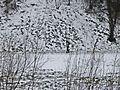 Prato,02,02,2012-Camminando nella neve.jpg