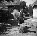 """Predivo trese, da gredo """"špičənce"""" ven, potem, ko ga je česala na grebenu, Artiža vas 1950.jpg"""