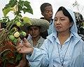 President Gloria Macapagal-Arroyo pick some ripe Jatropha fruits ready for harvest.jpg