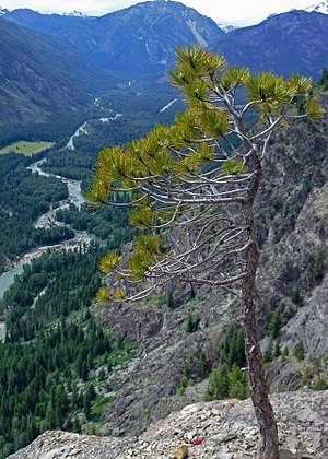 Mazama, Washington - View from the 11-pitch sport climb, Prime Rib, overlooking the Methow Valley.