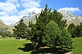 Queenstown-Lakes 18.jpg