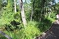 Réserve naturelle Marais Lavours Aignoz Ceyzérieu 35.jpg