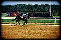 Race Horse at Laurel Park (11888704225).jpg