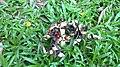 Red Lucky Seeds.jpg